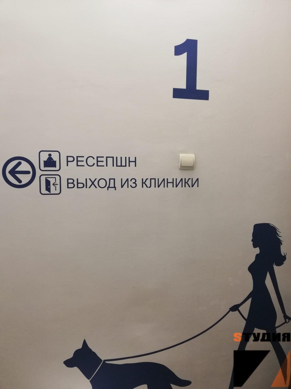 Роспись стен Визуальная навигация для ветеринарной клиники